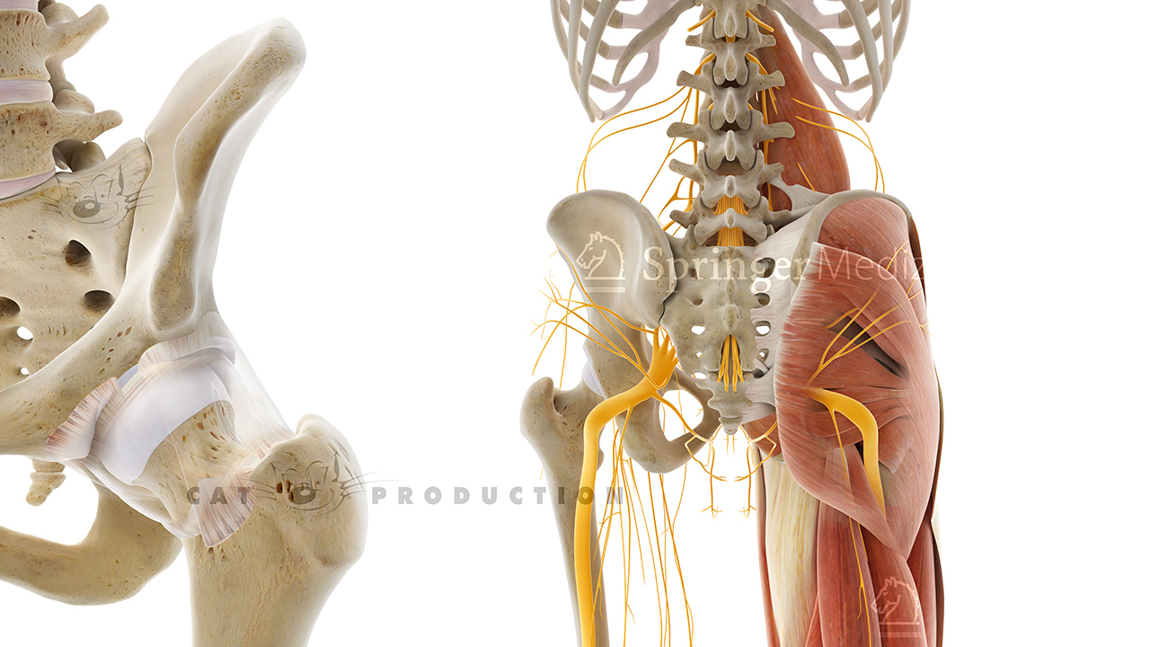CAT PRODUCTION GmbH - Medical Imaging